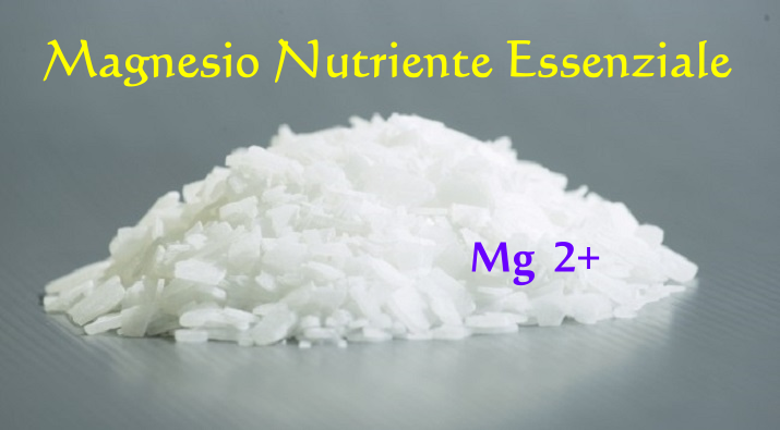 Magnesio Nutriente Essenziale