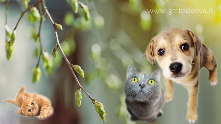 Gemmoterapia per Animali